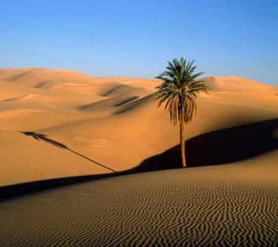 El Desierto De Mi Casa