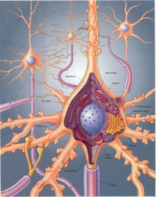 Mi Neurona Y Los Hombres